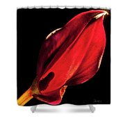 Back Lit Black Calla Lily Shower Curtain