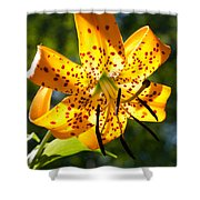 Back-lit Yellow Tiger Lily Shower Curtain