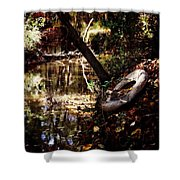 Back Road Finds Shower Curtain