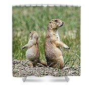 Back To Back Prairie Dogs Shower Curtain
