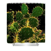 Backlit Cacti Shower Curtain