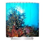 Backlit Coral Shower Curtain