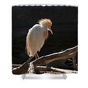 Backlit Egret Shower Curtain