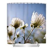 Backlit Fuzzy Flower Shower Curtain by Ray Laskowitz - Printscapes