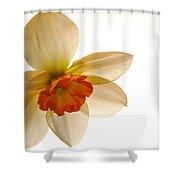 Backlit Jonquil Shower Curtain