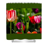 Backlit  Shower Curtain