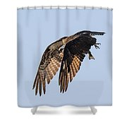 Backlit Osprey Takes Flight Shower Curtain