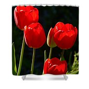Backlit Red Tulips Shower Curtain