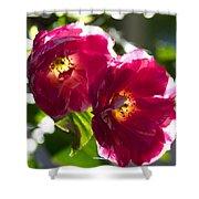 Backlit Roses Shower Curtain