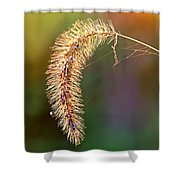 Backlit Seed Head In Fall Shower Curtain