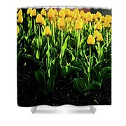 Backlit Tulips Shower Curtain