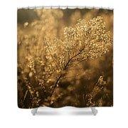 Backlit Wildflower Seeds In Autumn Shower Curtain
