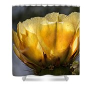 Backlit Yellow Cactus Flower Shower Curtain