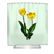 Backlit Yellow Tulips Shower Curtain