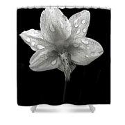 Backside Daffodil Dew Shower Curtain