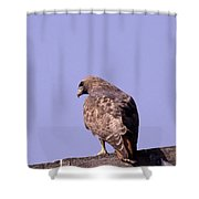Backside Of A Hawk   Shower Curtain