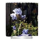 Backyard 1 Shower Curtain