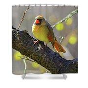 Backyard Bird Female Northern Cardinal Shower Curtain