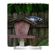 Backyard Blue Jay Shower Curtain