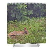 Backyard Bunny Shower Curtain