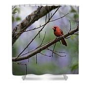 Backyard Cardinal Shower Curtain
