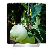 Backyard Garden Series - 2 Apples Shower Curtain