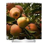 Backyard Garden Series - Apples Cluster Shower Curtain