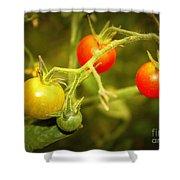 Backyard Garden Series - Cherry Tomatoes Shower Curtain