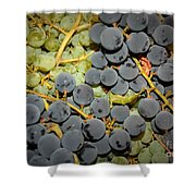Backyard Garden Series - Grapes And Vines Shower Curtain