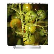 Backyard Garden Series - Green Cherry Tomatoes Shower Curtain