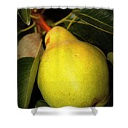 Backyard Garden Series - One Pear Shower Curtain