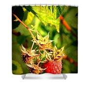 Backyard Garden Series - One Ripe Raspberry Shower Curtain