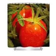 Backyard Garden Series - Roma Tomatoes Shower Curtain