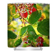 Backyard Garden Series - Sunlight On Raspberries Shower Curtain