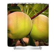 Backyard Garden Series - Two Apples Shower Curtain
