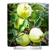 Backyard Garden Series- Golden Delicious Apples Shower Curtain