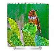 Backyard Hummingbird #22 Shower Curtain