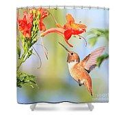 Backyard Hummingbird Series # 54 Shower Curtain