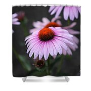 Backyard Wonders Shower Curtain