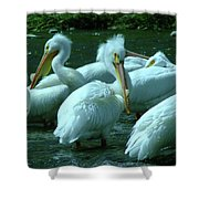 Bad Hair Day At The Pelican Social Gathering  Shower Curtain