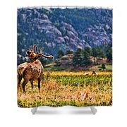 Badlands Elk  Shower Curtain