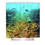 Bahamas Shipwreck Fish Shower Curtain