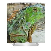 Bahia Honda Iguana Shower Curtain
