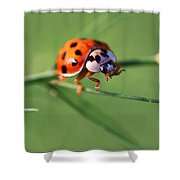 Balancing Act Shower Curtain by William Selander
