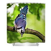 Balanced Blue Jay Shower Curtain