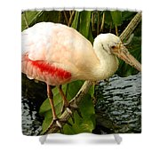 Balancing Act - Roseate Spoonbill Shower Curtain