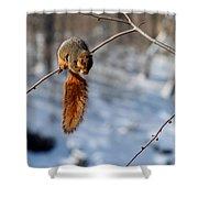 Balancing Squirrel Shower Curtain
