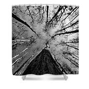 Bald Cypress Sky Shower Curtain
