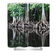 Bald Cypress Trees Along The Withlacoochee River Shower Curtain