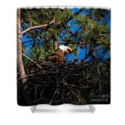 Bald Eagle In The Nest Shower Curtain